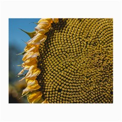 Sunflower Bright Close Up Color Disk Florets Small Glasses Cloth (2 Side)