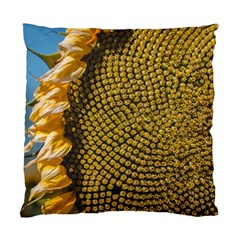 Sunflower Bright Close Up Color Disk Florets Standard Cushion Case (two Sides)
