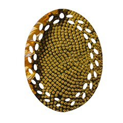 Sunflower Bright Close Up Color Disk Florets Oval Filigree Ornament (two Sides)