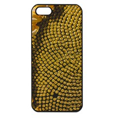 Sunflower Bright Close Up Color Disk Florets Apple Iphone 5 Seamless Case (black)