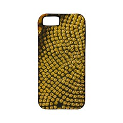 Sunflower Bright Close Up Color Disk Florets Apple Iphone 5 Classic Hardshell Case (pc+silicone)