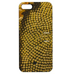 Sunflower Bright Close Up Color Disk Florets Apple Iphone 5 Hardshell Case With Stand