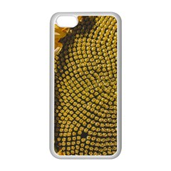 Sunflower Bright Close Up Color Disk Florets Apple Iphone 5c Seamless Case (white)