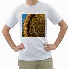 Sunflower Bright Close Up Color Disk Florets Men s T Shirt (white)