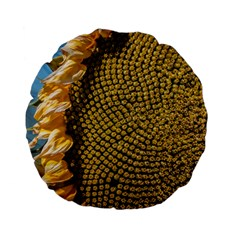Sunflower Bright Close Up Color Disk Florets Standard 15  Premium Flano Round Cushions