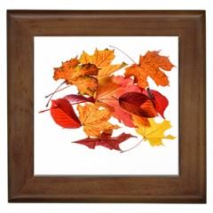 Autumn Leaves Leaf Transparent Framed Tiles