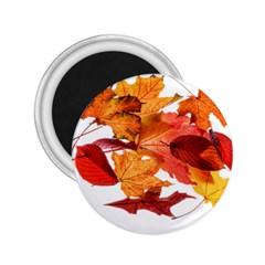 Autumn Leaves Leaf Transparent 2 25  Magnets