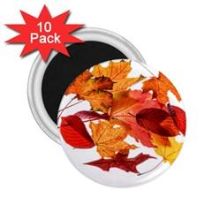 Autumn Leaves Leaf Transparent 2 25  Magnets (10 Pack)