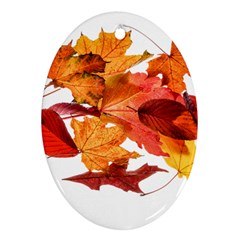 Autumn Leaves Leaf Transparent Oval Ornament (two Sides)