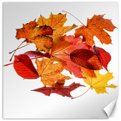 Autumn Leaves Leaf Transparent Canvas 12  X 12