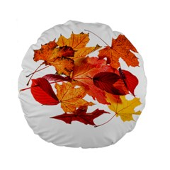 Autumn Leaves Leaf Transparent Standard 15  Premium Flano Round Cushions