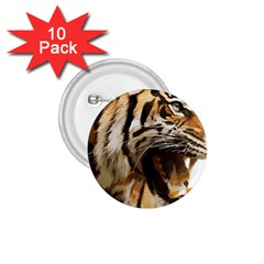Royal Tiger National Park 1 75  Buttons (10 Pack)