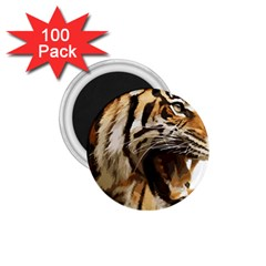 Royal Tiger National Park 1 75  Magnets (100 Pack)