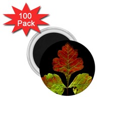 Autumn Beauty 1.75  Magnets (100 pack)