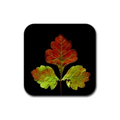 Autumn Beauty Rubber Square Coaster (4 pack)