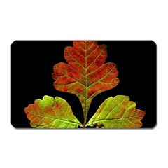 Autumn Beauty Magnet (Rectangular)
