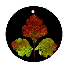 Autumn Beauty Round Ornament (Two Sides)
