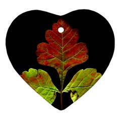 Autumn Beauty Heart Ornament (Two Sides)