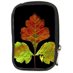 Autumn Beauty Compact Camera Cases