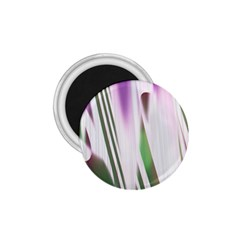 Colored Pattern 1.75  Magnets