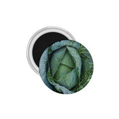 Bright Cabbage Color Dew Flora 1.75  Magnets