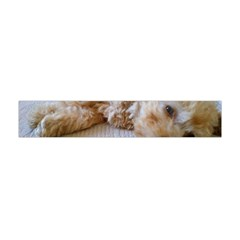 Apricot Poodle Laying Flano Scarf (Mini)