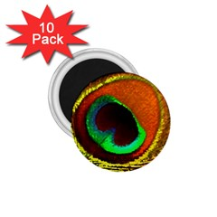 Peacock Feather Eye 1.75  Magnets (10 pack)