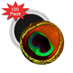 Peacock Feather Eye 2.25  Magnets (100 pack)