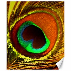 Peacock Feather Eye Canvas 8  x 10