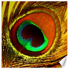 Peacock Feather Eye Canvas 16  x 16