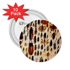 Insect Collection 2.25  Buttons (10 pack)