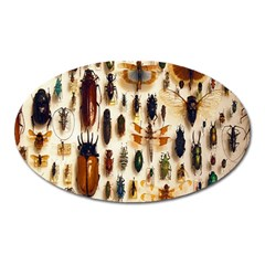 Insect Collection Oval Magnet