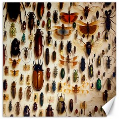 Insect Collection Canvas 16  x 16