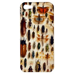Insect Collection Apple iPhone 5 Hardshell Case