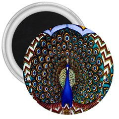 The Peacock Pattern 3  Magnets