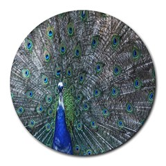 Peacock Four Spot Feather Bird Round Mousepads