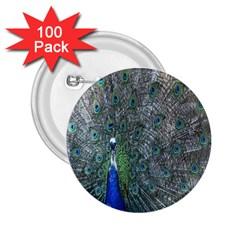 Peacock Four Spot Feather Bird 2.25  Buttons (100 pack)