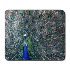 Peacock Four Spot Feather Bird Large Mousepads