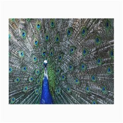 Peacock Four Spot Feather Bird Small Glasses Cloth