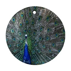 Peacock Four Spot Feather Bird Round Ornament (Two Sides)