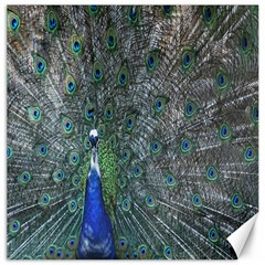 Peacock Four Spot Feather Bird Canvas 16  X 16
