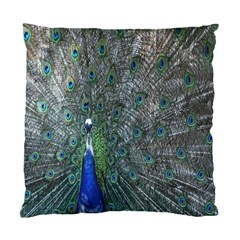Peacock Four Spot Feather Bird Standard Cushion Case (Two Sides)