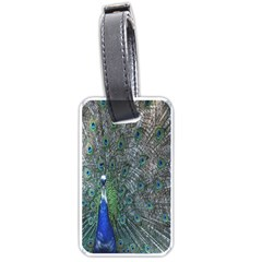 Peacock Four Spot Feather Bird Luggage Tags (One Side)