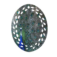 Peacock Four Spot Feather Bird Ornament (Oval Filigree)