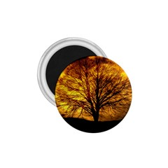 Moon Tree Kahl Silhouette 1.75  Magnets