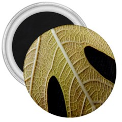 Yellow Leaf Fig Tree Texture 3  Magnets