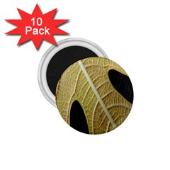 Yellow Leaf Fig Tree Texture 1.75  Magnets (10 pack)