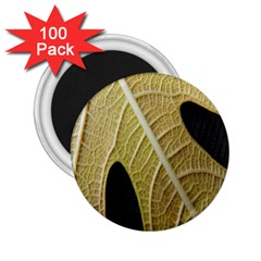 Yellow Leaf Fig Tree Texture 2.25  Magnets (100 pack)