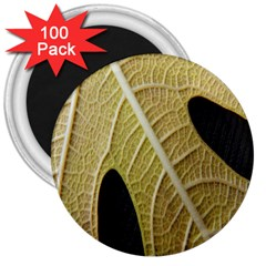 Yellow Leaf Fig Tree Texture 3  Magnets (100 pack)