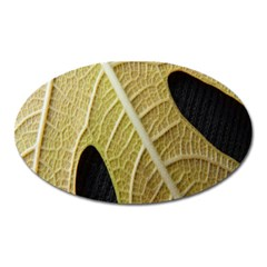 Yellow Leaf Fig Tree Texture Oval Magnet